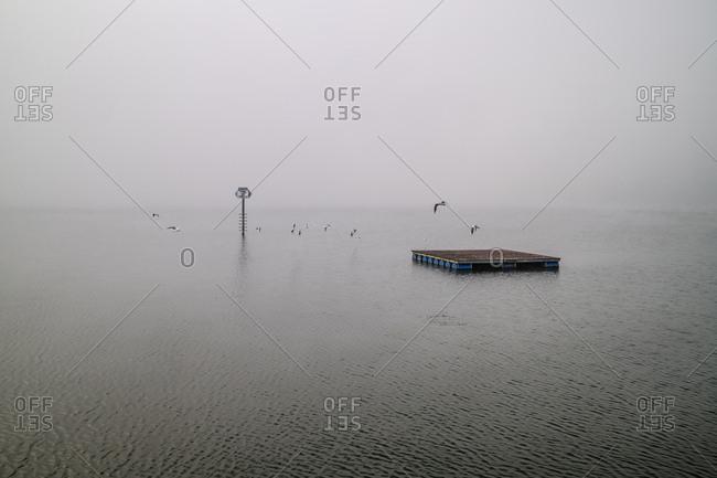 Seagulls flying around floating dock