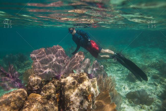 Man snorkeling near sea fan, gorgonian coral (Alcyonacea) among coral reef, Utila Island, Honduras