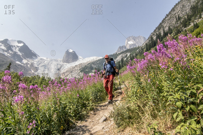 Front view of backpacker hiking on trail with wildflowers in Bugaboo Mountains, British Columbia, Canada