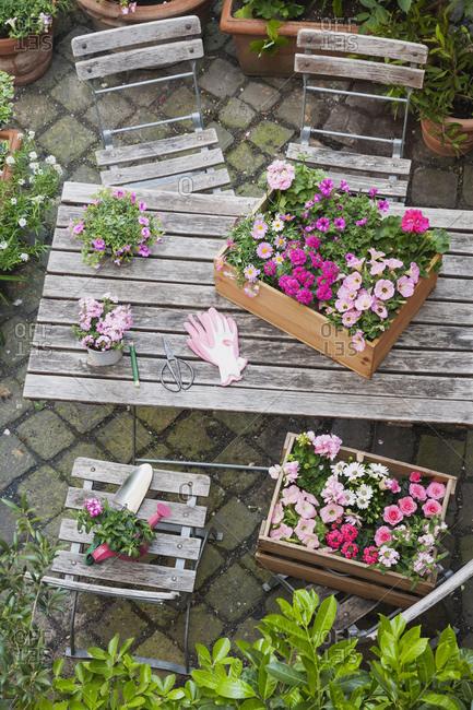 Gardening- planting of summer flowers