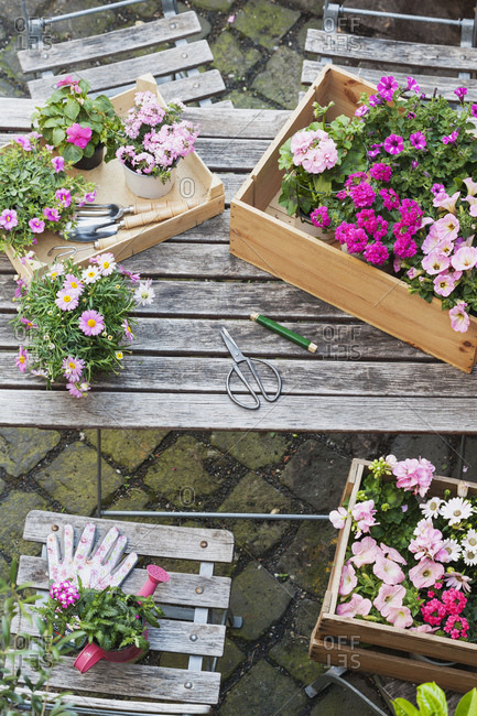 Gardening- planting of summer flowers