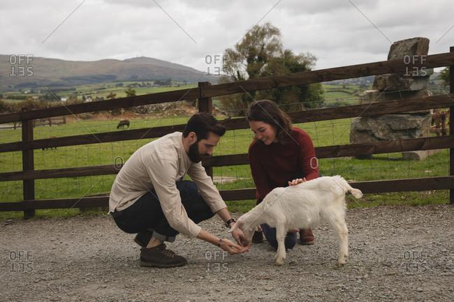 Couple feeding goat