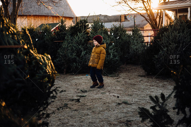 Boy looking for a tree on a tree farm