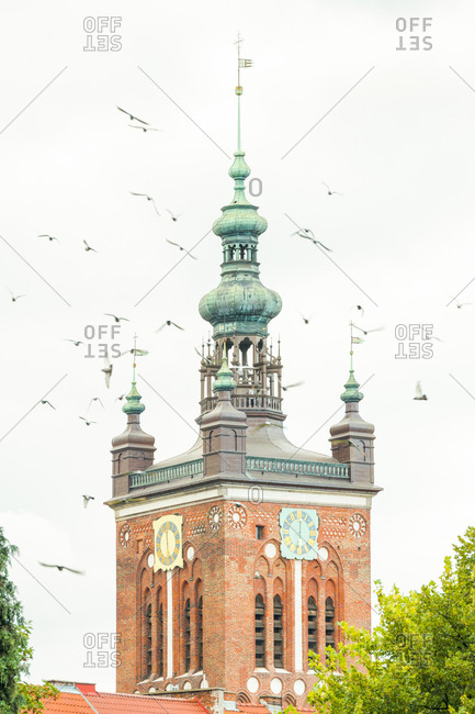 Poland- Pomerania- Gdansk- Town hall tower and seagulls