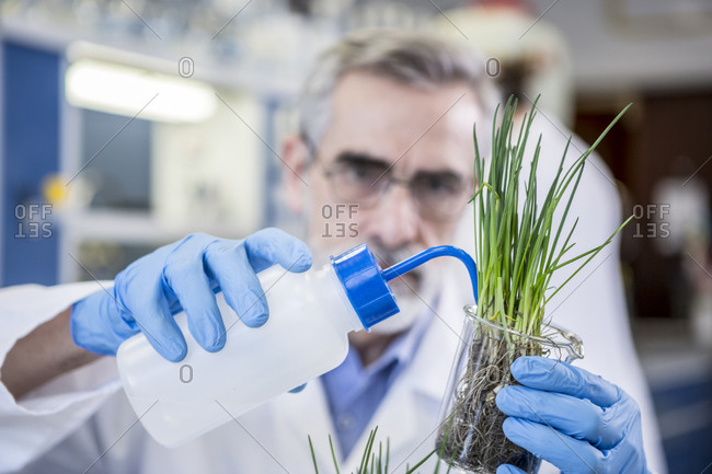 Scientist in lab watering plant