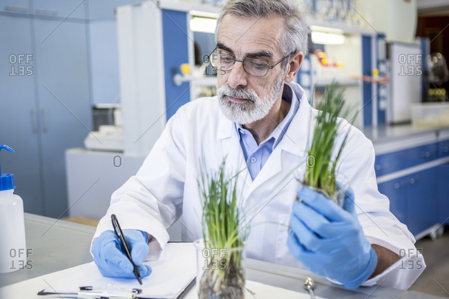 Scientist in lab examining plant and taking notes