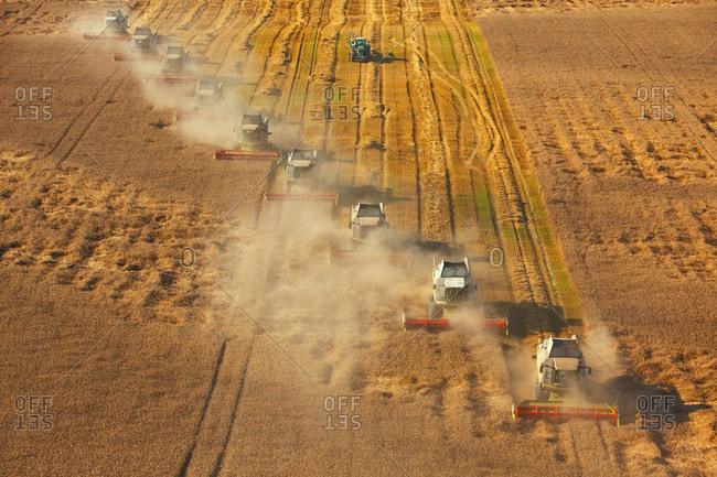 Harvesting with combine harvesters, Slavonia, Croatia