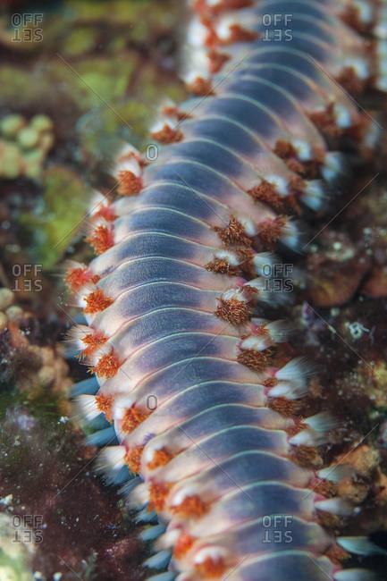 Sea urchin, close-up, Adriatic Sea