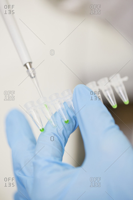 Scientist pipetting samples for testing