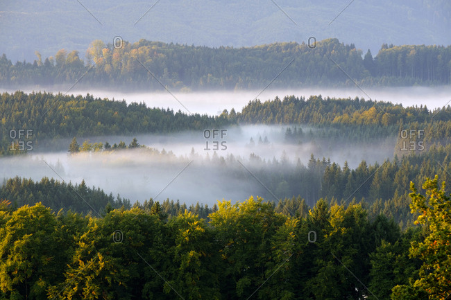 Morning fog over the forests at Aidlinger Hohe, near Murnau, Pfaffenwinkel, Upper Bavaria, Bavaria, Germany, Europe
