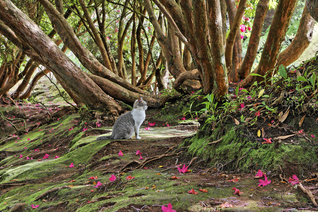 A cat under a rhododendron tree, Parque das Quimeidas, Madeira, Portugal, Europe