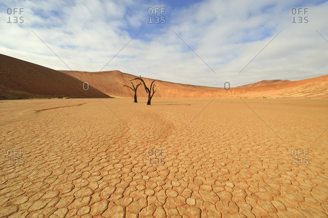 Dessicated Dead Vlei with dead trees in the Namib Desert, Namibia, Africa