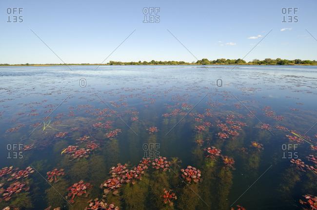 Nguma Lagoon, Botswana, Africa