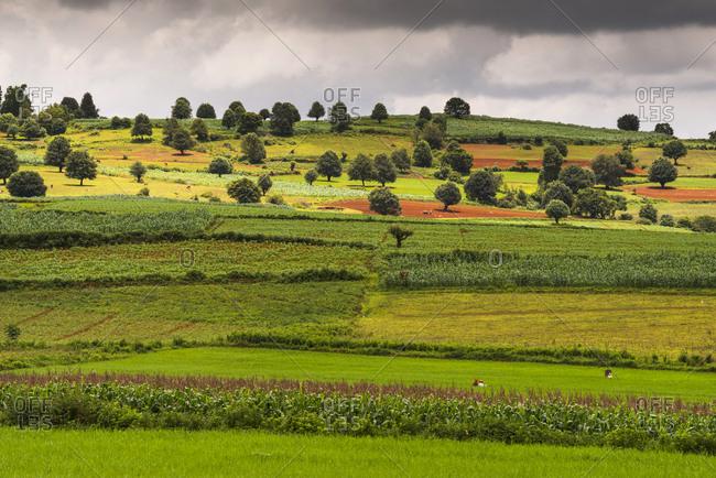 July 24, 2014: Fields near Kalaw, Shan State, Myanmar, Burma, Asia