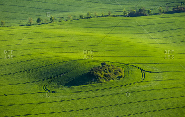 Spring sowing, green field in a moraine landscape with a hedge area, Gross Roge, Mecklenburg-Western Pomerania, Germany, Europe