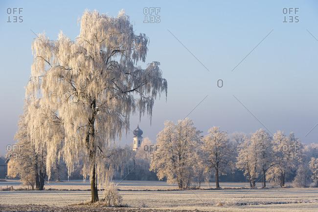 Winter landscape, trees with hoarfrost, steeple in between, Erdinger Moos, Bavaria, Germany, Europe