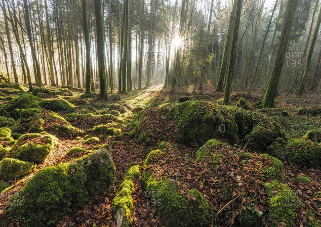 Druidenhain in Franconian Switzerland at sunrise, moss-covered dolomite cliffs in the spruce and beech forest, Wohlmannsgesees, district of Forchheim, Franconian Switzerland, Upper Franconia, Bavaria, Germany, Europe