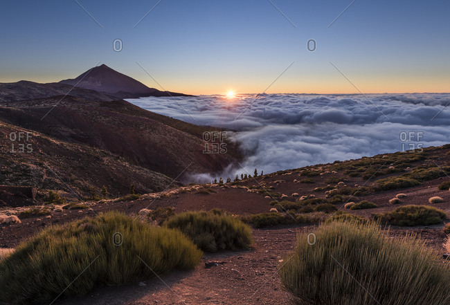 Volcano Pico del Teide, height 3718m, view from Orotava Valley, bushes in foreground, sunset, Tenerife, Canary Islands, Spain, Europe