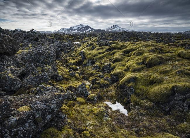 Moss covered lava rock, lava field Berserkjahraun, peninsula Snaefellsnes, Vesturland, Island