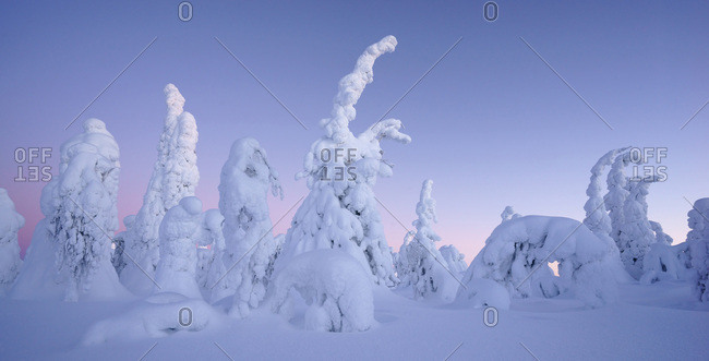 Snow covered trees, Kuusamo area, Finland, Europe