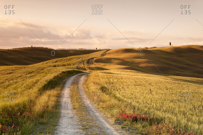 Lane through Tuscan countryside at San Quirico, cypresses, Val d'Orcia, Tuscany, Province of Siena, Italy, Europe