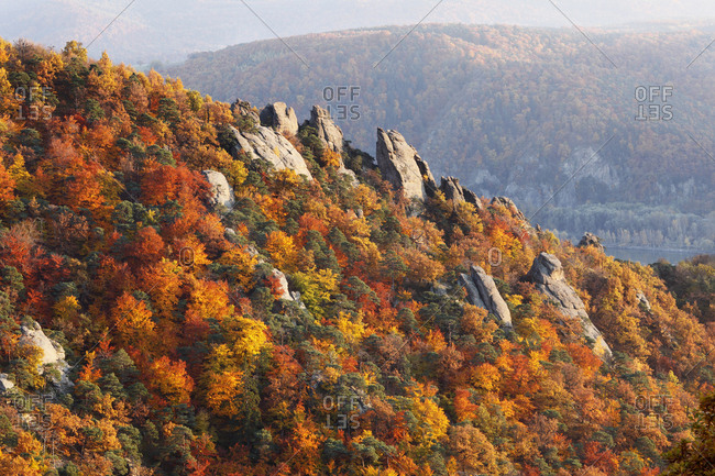 Rocks and autumnal mixed forest above Duernstein, viewed from Vogelbergsteig trail, Wachau valley, Waldviertel region, Lower Austria, Europe