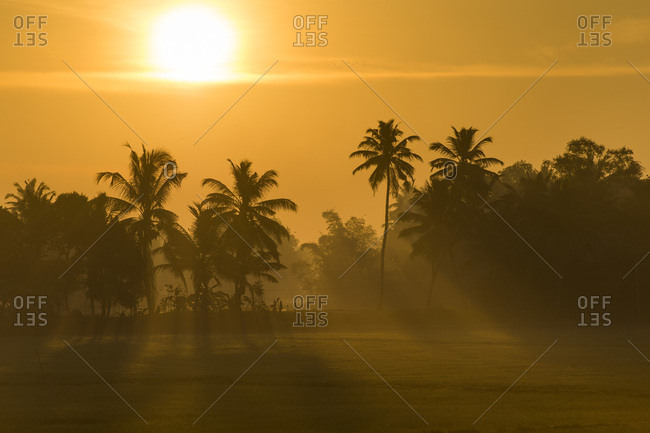Early morning with the rising sun, palm trees, backwaters, Kerala, Malabar Coast, South India, India, Asia