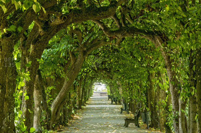Lime tree arcade (Tilia), court garden, palace garden, Dachau Castle, Dachau, Upper Bavaria, Bavaria, Germany, Europe