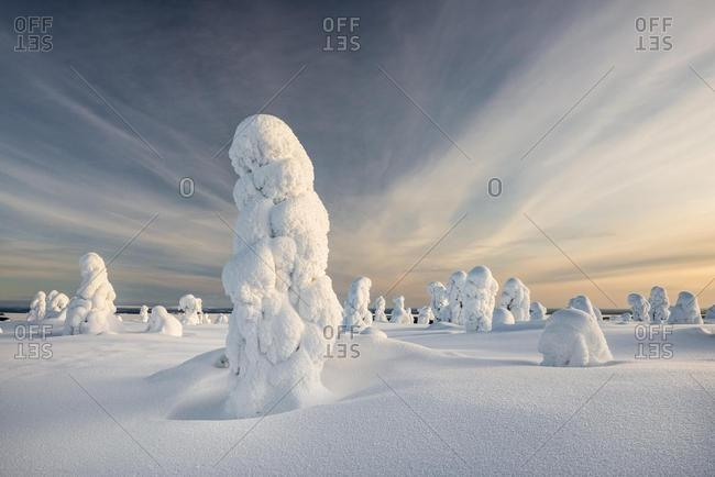 Trees covered in snow, winter landscape, Riisitunturi National Park, Posio, Lapland, Finland, Europe