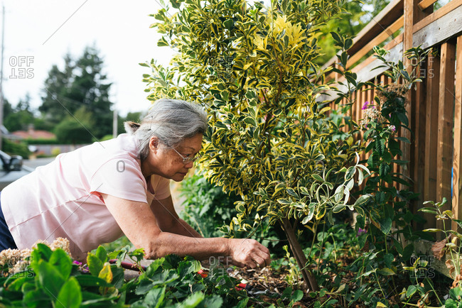 Elderly woman examining garden