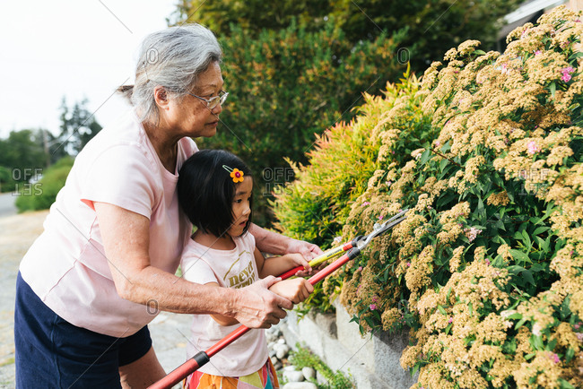 Grandmother showing granddaughter how to trim bush