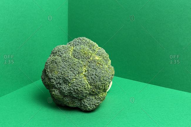 Studio shot of fresh uncooked broccoli tree on bright green background