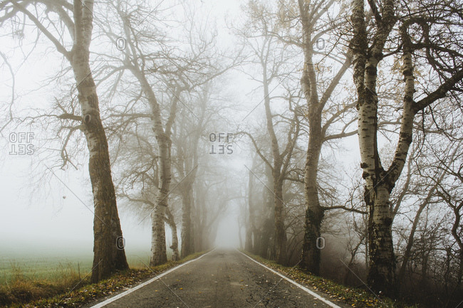 View to asphalt road in countryside through foggy woods