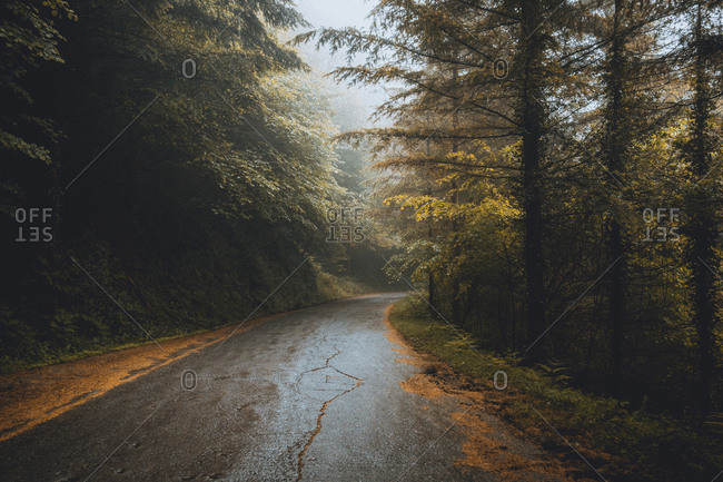 Asphalt road going through forest on foggy day