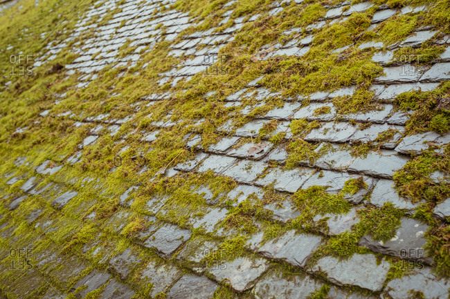 Background of cobbled surface covered with green moss