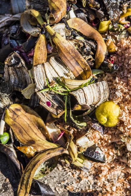 Pile of kitchen scraps - Offset