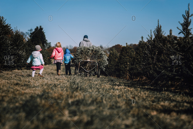 Family walking away after choosing  their Christmas tree at a farm