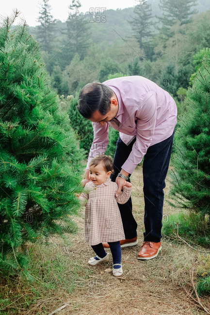 Father supporting toddler girl as she looks at a tree in a Christmas tree farm