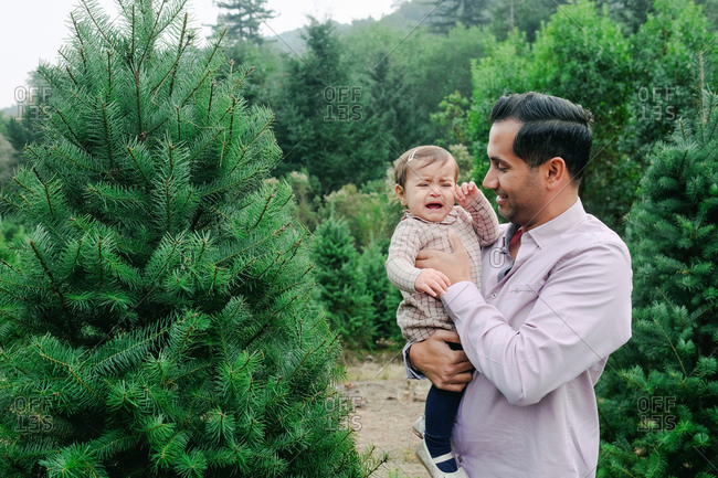 Father holding crying baby girl in a Christmas tree farm