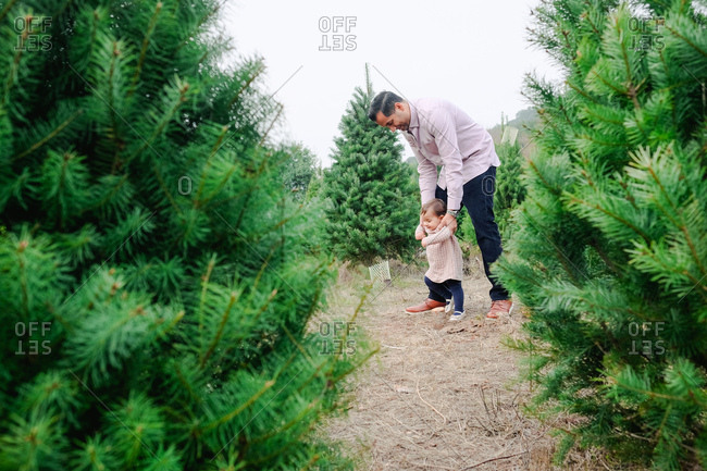 Father supporting toddler girl as she walks on a path through a Christmas tree farm