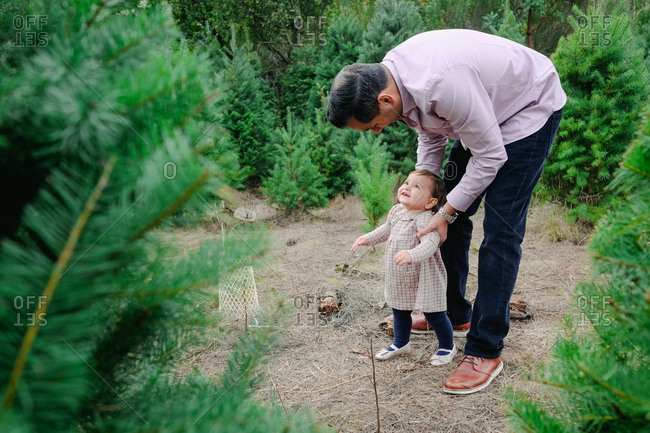 Father supporting toddler girl as she walks through a Christmas tree farm