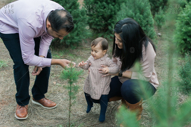 Mother and father with baby girl at Christmas tree farm