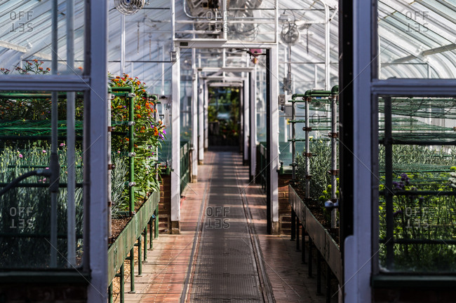 Interior of greenhouse with containers of plants