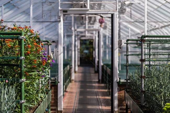 Interior of greenhouse with flowers and seedlings