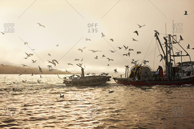 Flock of seagulls flying around a tugboat on the ocean