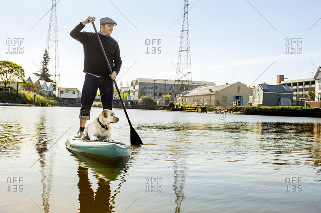 Middle aged man paddle boarding on a lake with his dog