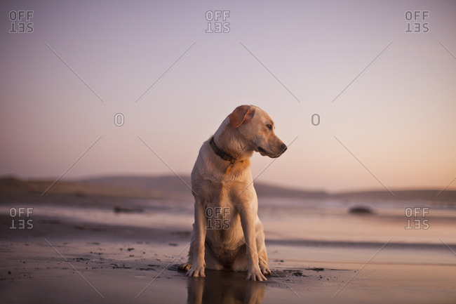 Portrait of dog sitting in the sand at the beach.
