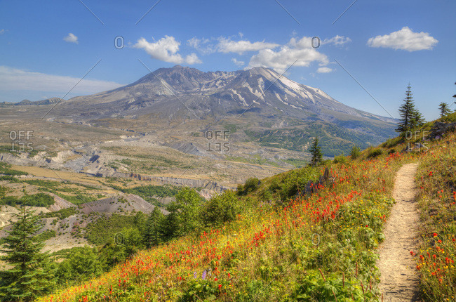 Mount St. Helens with wild flowers, Mount St. Helens National Volcanic Monument, Washington State, United States of America, North America
