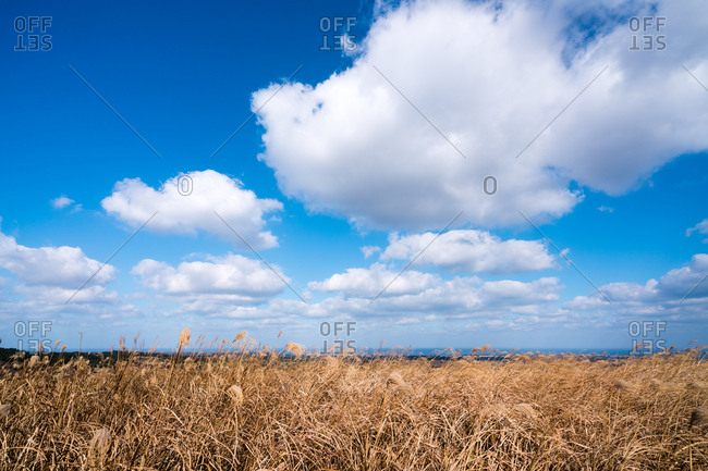Grassy landscape on Jeju Island, South Korea