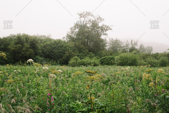 Wildflowers growing in meadow in Alaska